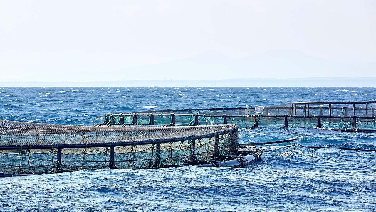 Balık çiftliklerine nur yağdı
