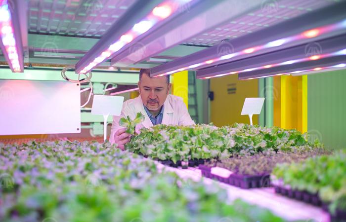 Cantek Group, Avrupa'nın aktif  en büyük bitki fabrikasını kurdu