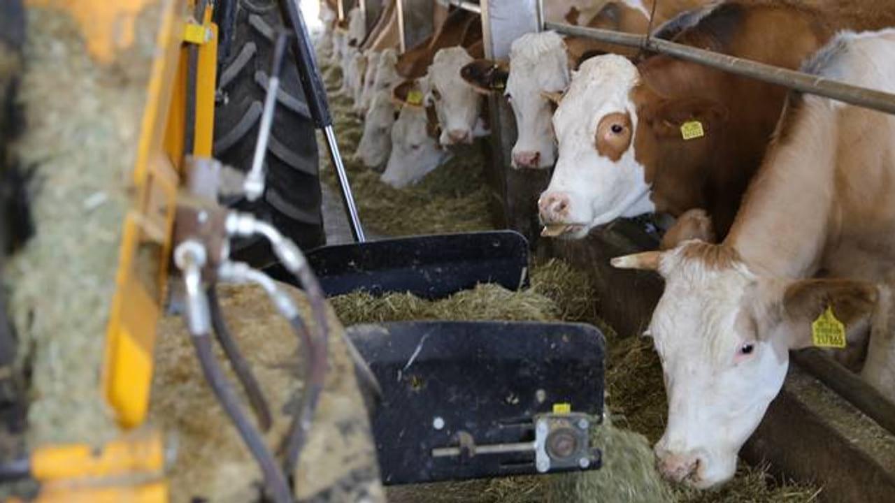 Efeler Çiftliği halka arza hazırlanıyor