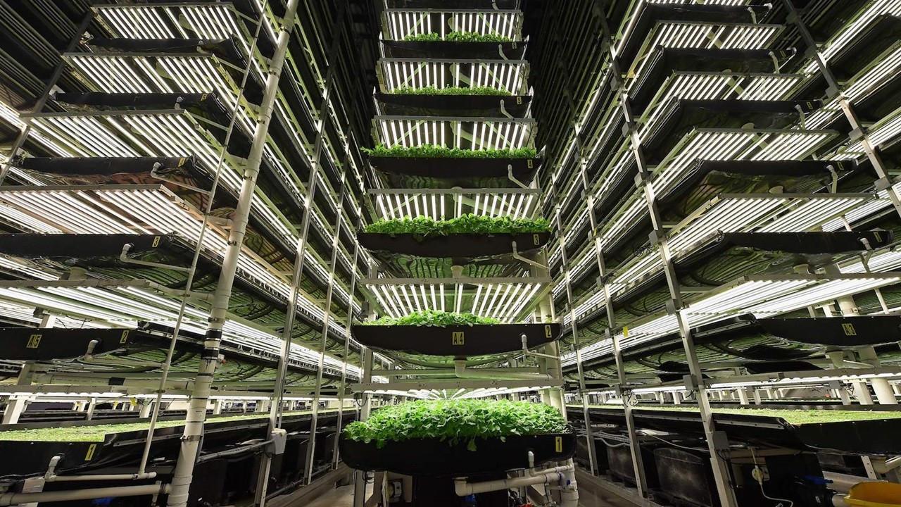 HGT Tarım, 1 milyon metrekareye dikey tarım fabrikası kuruyor