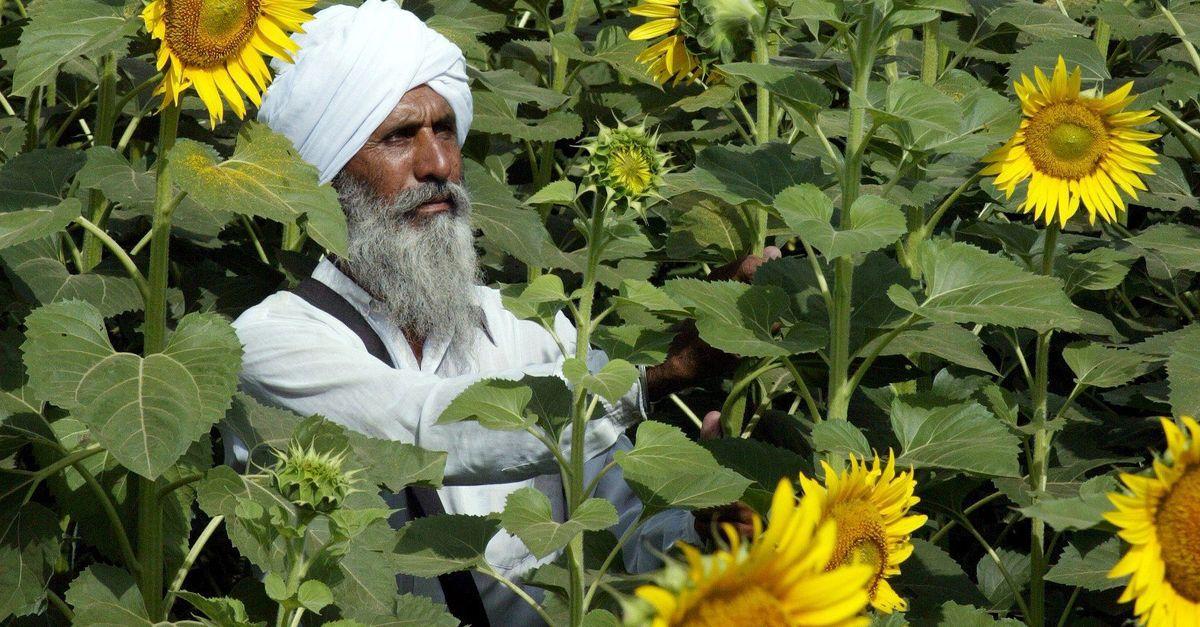 Hindistan çiftçisine yağlı tohum üretimini artırmaları için 1,5 milyar dolarlık destek