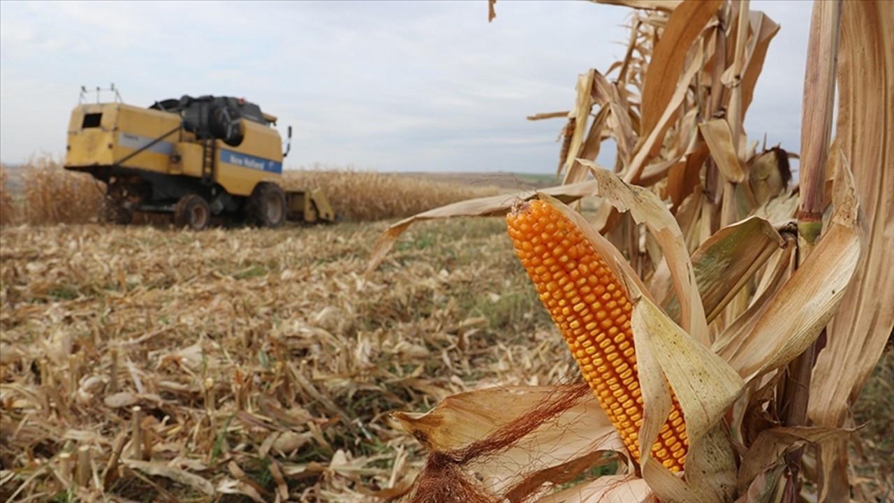 TMO, 325 bin ton mısır alacak