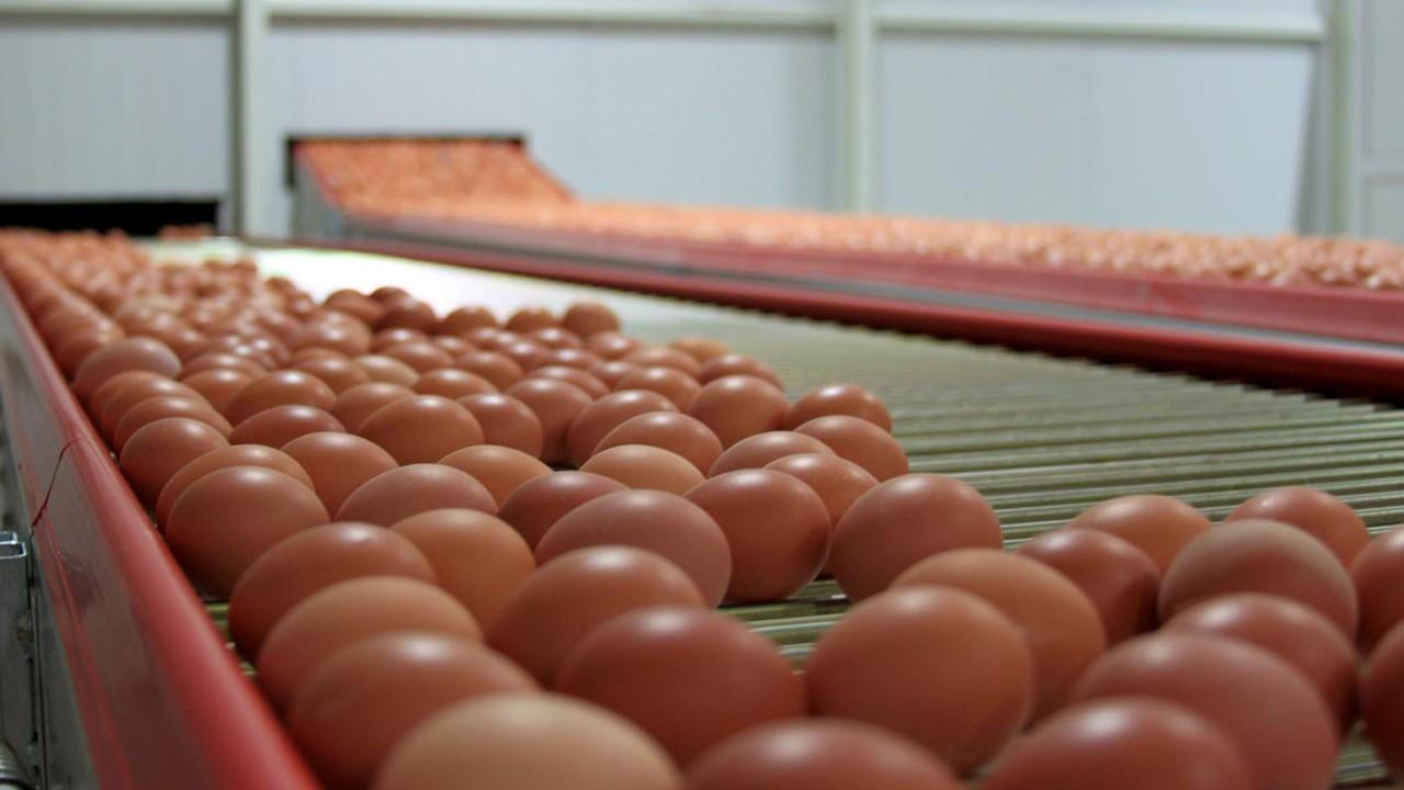 Türkiye'den Singapur'a yumurta ihracatı başladı